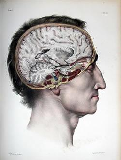 Bourgery, Marc Jean (1797-1849). Traité complet de l'anatomie de l'homme, comprenant la médecine opératoire. 8 vols. Paris, 1831-1854.