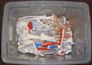 Disarticulated Bones.JPG