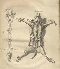 JEAN PECQUET (1622-1674)