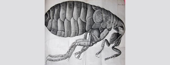 Hooke, Robert, 1635-1703