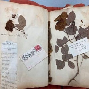 Scrapbook of pressed flowers