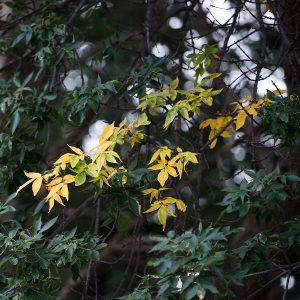 Image of leafy branches on campus