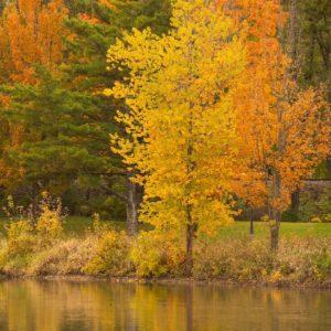 Image of trees along Iowa River