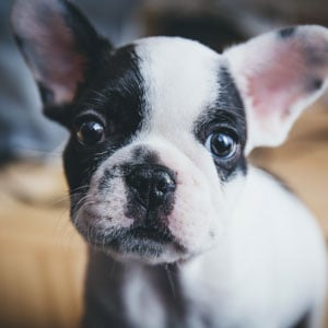 Cute puppy closeup